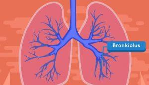 bronkiolus